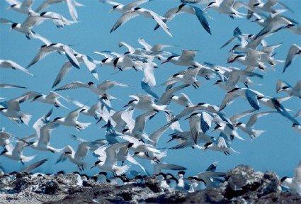 Terns in the wetlands
